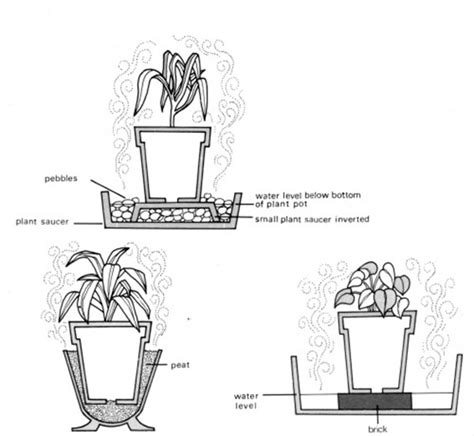 correct amount of water and humidity for plants