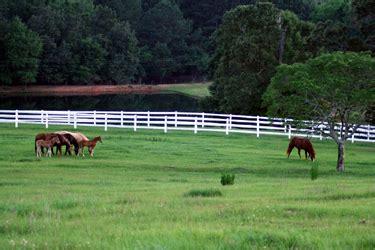 China Garden Headland Al by Southern Cross Ranch Headland Alabama
