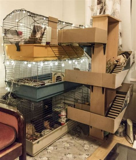 guinea pig house the guinea pig house casa de emilio guinea pigs pinterest guinea pigs pets and