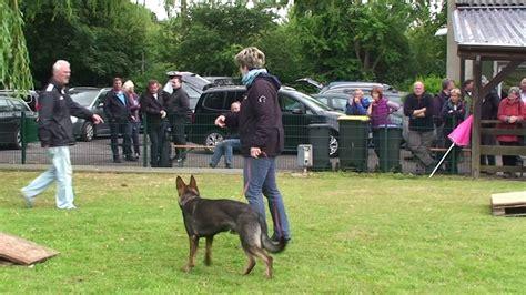 le berger test le nouveau test de caract 232 re pour le chien berger