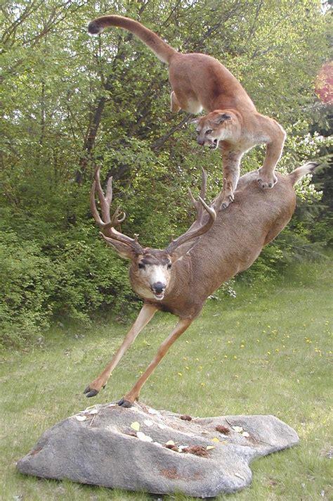 deer attacks attacking quotes quotesgram
