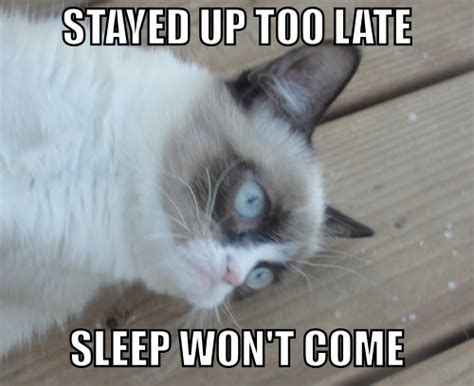 Sleeping Cat Meme - grumpy cat sleep won t come grumpy cat know your meme