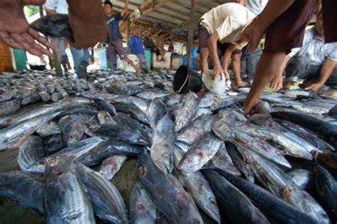 Lele Segar warga bengkulu sulit dapatkan ikan segar bibitikan net