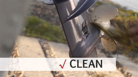 how to remove zebra mussels from a boat zebra mussels cause boat motor damage youtube