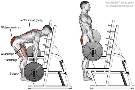 Rack Deadlift Technique by Barbell Rack Pull A Major Back And Lower Compound