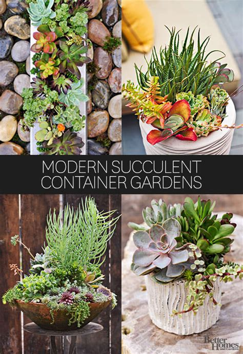 10 fresh ways to add succulents to your home gardening viral