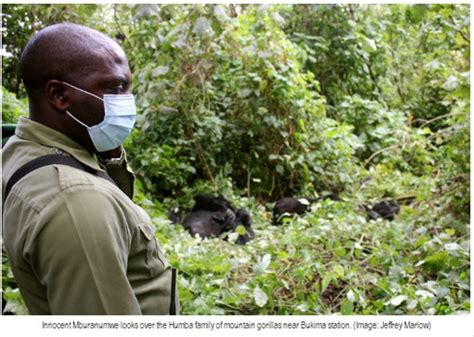 so you want to be a park ranger books sie wollen ranger im virunga nationalpark werden so you