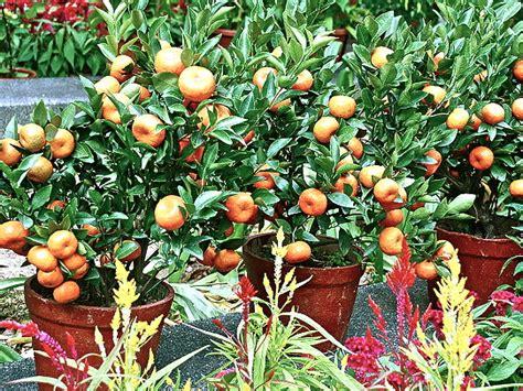 vertical fruit garden gardening landscaping vertical