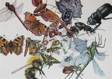 natural history painting colour wheel cath hodsman british wildlife and natural history artist