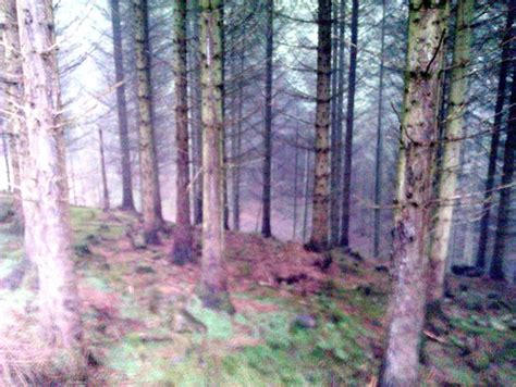 view through the trees picture of whinlatter forest park