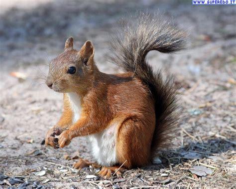 immagini di foto scoiattoli foto in alta definizione hd