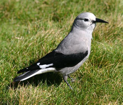 british columbia bird photos