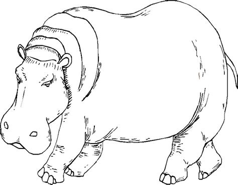 free coloring pages of hippo face