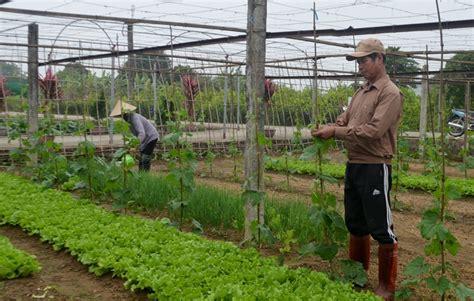 cgv nguy n xí hải h 224 trồng rau an to 224 n để tăng nguồn thu b 225 o quảng