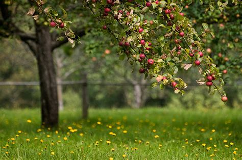 fields for growing fruit trees apple land station home