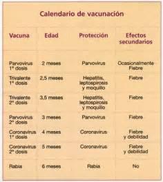 Calendario Canino Vacunaci 243 N Perros