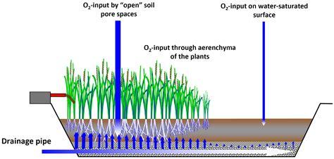 design criteria for sludge drying beds ecotechnological treatment of sewage sludge helmholtz
