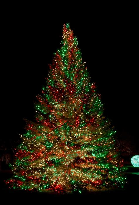 top 10 pictures of christmas trees for christmas day 60 most popular christmas tree decorations ideas a diy