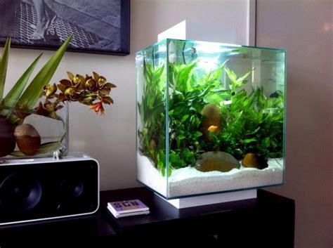 fluval edge aquascape fluval edge 46 litre low tech nano aquarium planted nano aquariums pinterest
