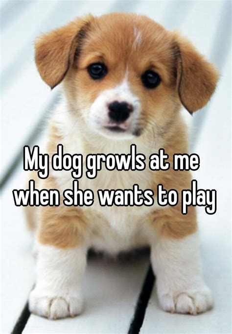 my growls at me my growls at me when she wants to play