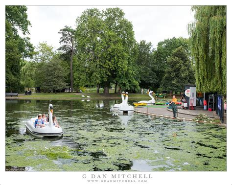 swan boats colchester g dan mitchell photograph children and duck boat man