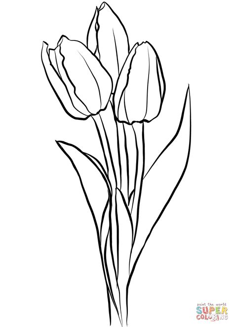 tulip coloring pages three tulips coloring page free printable coloring pages
