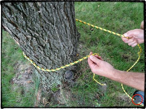 Tying A Hammock To A Tree - timber hitch the unsung csite bull moose patrol