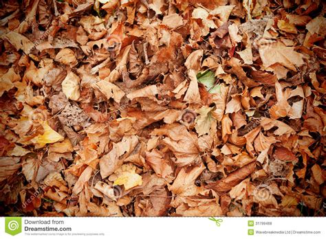 Dead Of Autumn dead leaves royalty free stock photos image 31799468