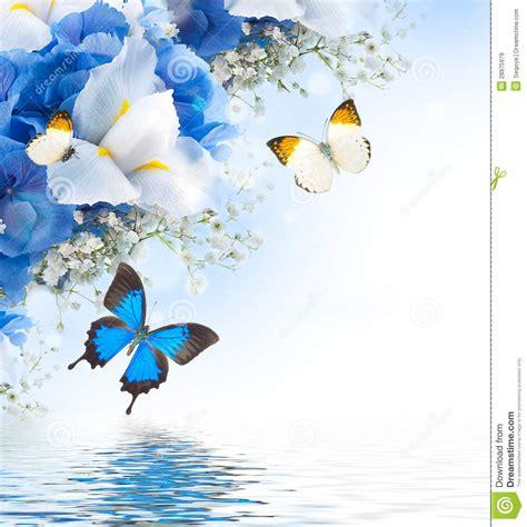 flores azules claras mariposa imagenes de archivo imagen 2050474 flores y mariposa azules im 225 genes de archivo libres de
