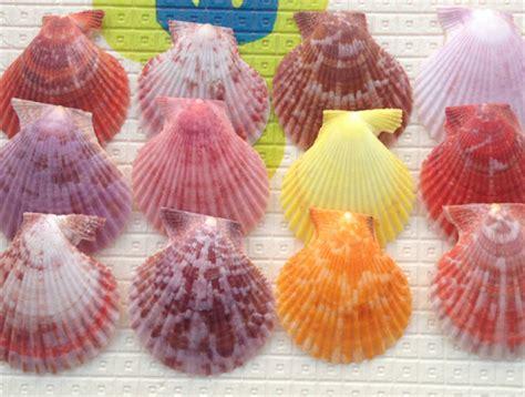 seashell color get cheap seashell color aliexpress alibaba