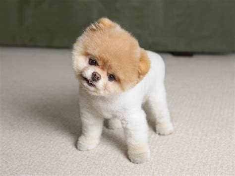 breeds small small breeds quotes