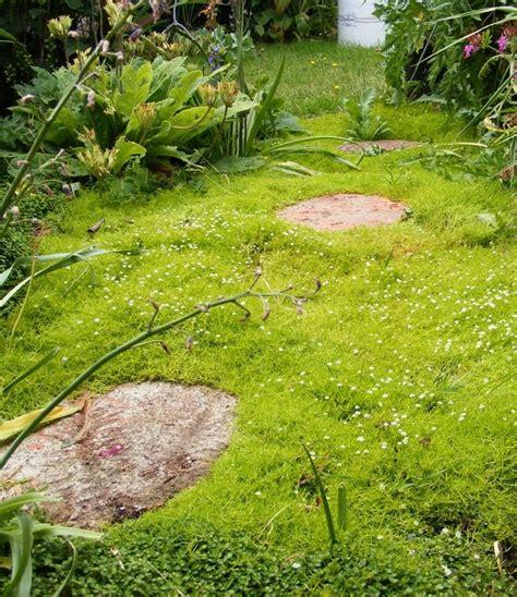 scotch moss path flower garden pinterest