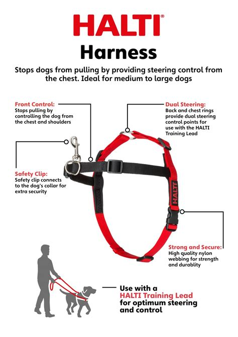 how to a not to pull on lead halti harness company of animals