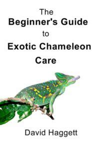 you are one in a chameleon books chameleon books sa chameleons