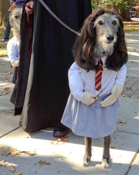 funniest dog halloween costumes funcage