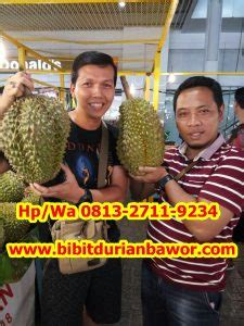 murah hpwa    jual durian bawor surabaya