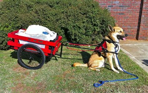 Ae Pulls Dogs Show For Foreseeable Future by 1000 Images About Dogs Cart Pulling On