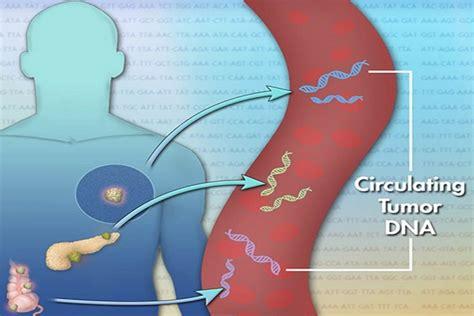 test sangue test sangue per scoprire 4 tumori precocemente