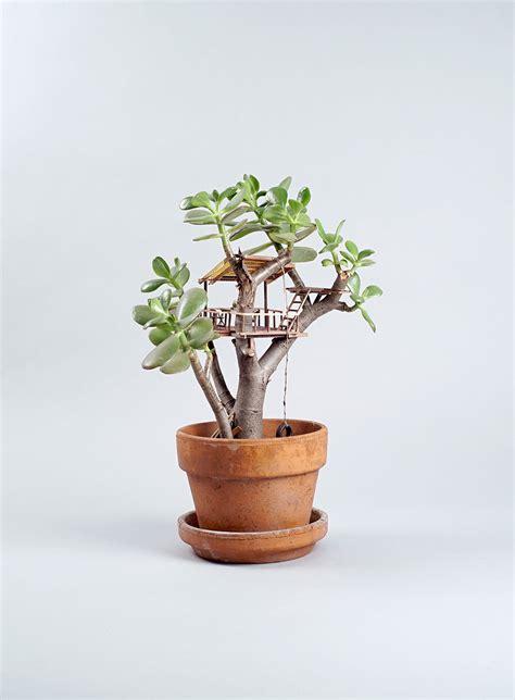 tiny indoor plants des cabanes miniatures dans les plantes 2tout2rien