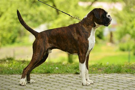 how to a to walk the lead how to your to heel your dogs guide omlet uk