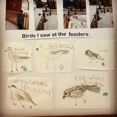 bird feeder science fair project from pen pals picture