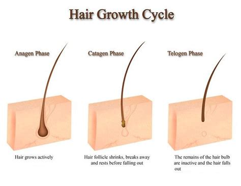 beginning stages of growing hair out for black men allanti beauty institute allanti beauty supply spa