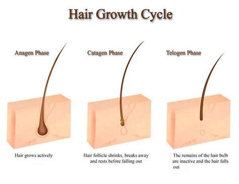 growing out pubic hair growing out pubic hair newhairstylesformen2014 com
