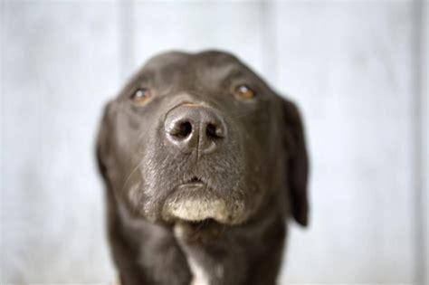 do dogs memory do dogs term memory pets