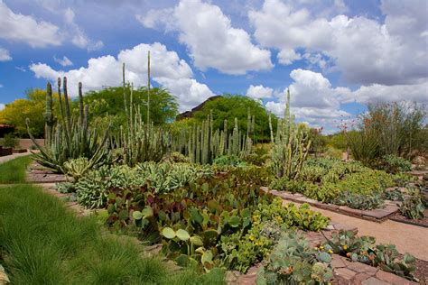 Arizona Botanical Gardens by Desert Botanical Garden Central Arizona