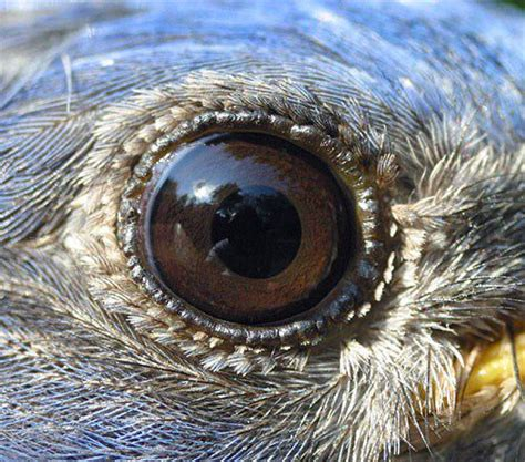 the quot eyes quot have it bird eyes