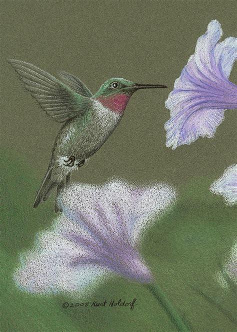 les 57 meilleures images 224 propos de hummingbirds how to