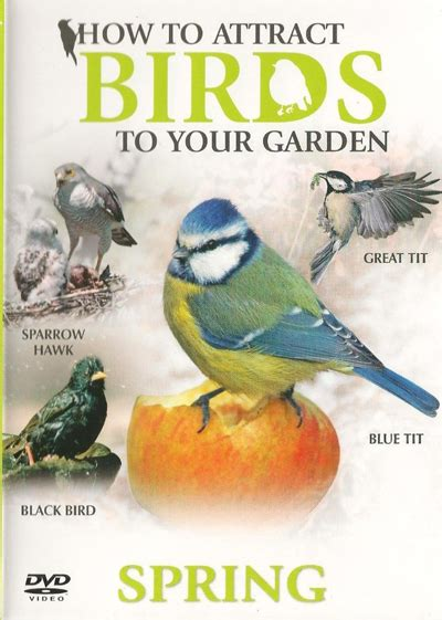 how to attract birds to your garden spring dvd duke video