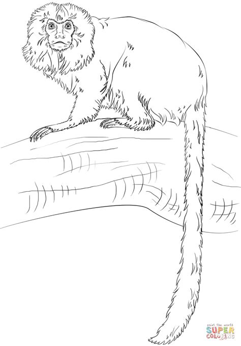 golden lion tamarin monkey coloring free printable coloring pages