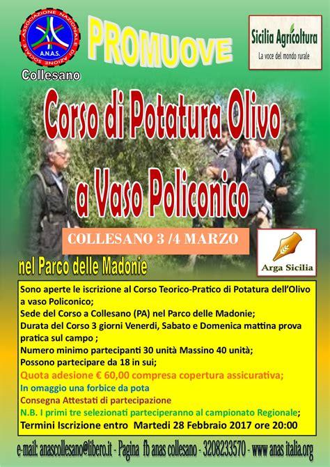 potatura olivo a vaso policonico corso di potatura olivo a vaso policonico eventi